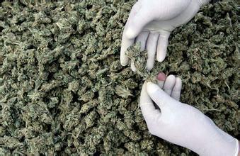 专家:大麻比香烟危害大十倍